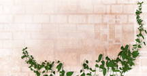 brick wall & leaves